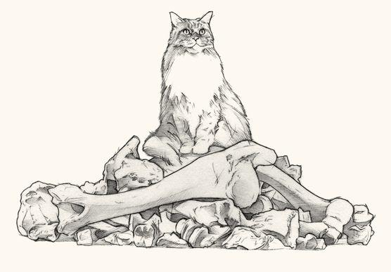 cat_0